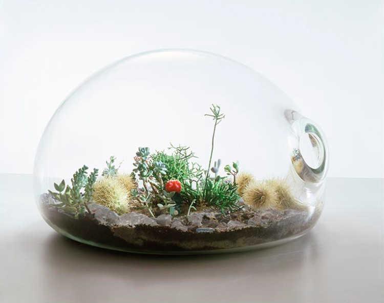 terrario en frasco de vidrio