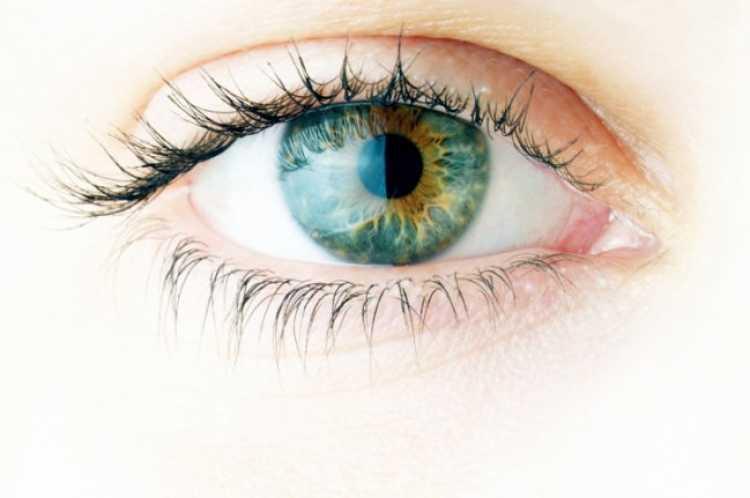 pupilas sin dilatar