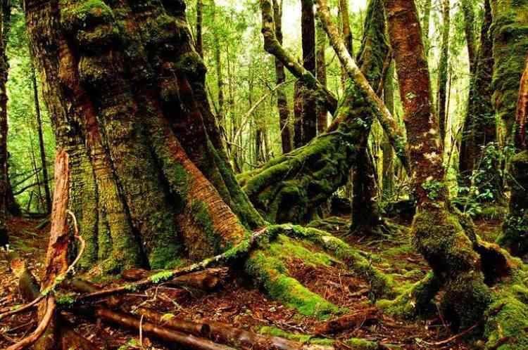bosques australia