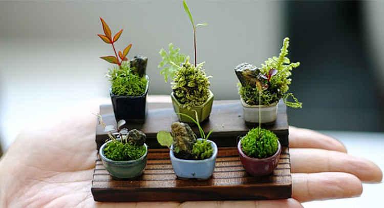 jardin miniatura mesas