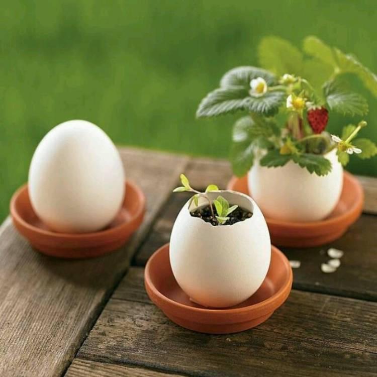 jardines miniatura de huevos