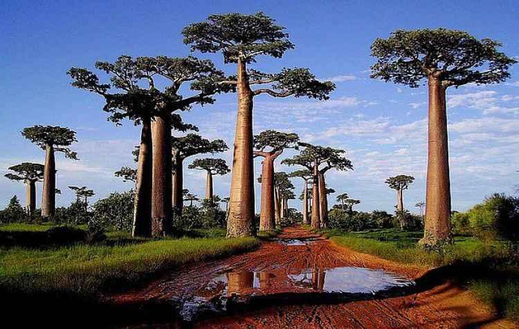 naturaleza de africa