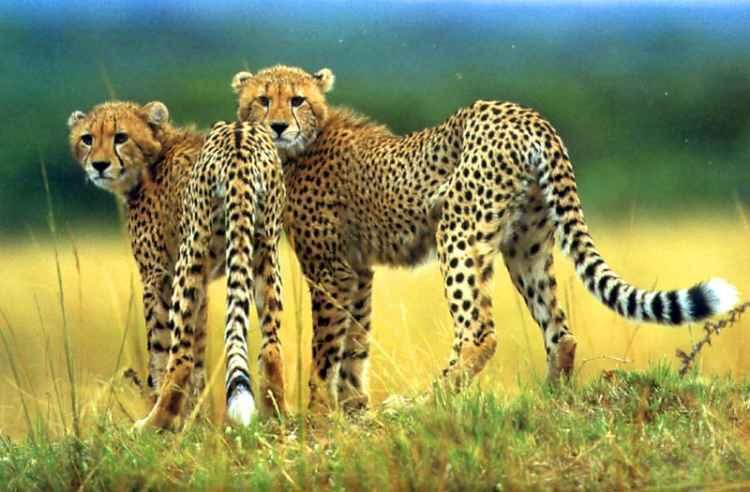 vida salvaje de africa
